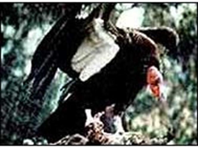 Bir dostluk kuşu akbaba